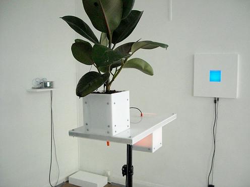 floraniumPlantExperiment01